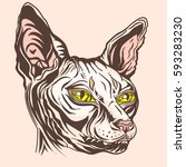 hand drawn cat breed sphinx.... | Shutterstock .eps vector #593283230