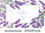 vector lavender flowers banner... | Shutterstock .eps vector #593399156