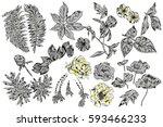 exotic flowers set. botanical ... | Shutterstock . vector #593466233