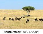 wildebeest in savannah ... | Shutterstock . vector #593470004