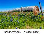 a meadow at a farm or ranch...   Shutterstock . vector #593511854