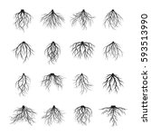 collection of black roots.... | Shutterstock .eps vector #593513990