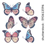 Vector vintage hand drawn set of beautiful colorful butterflies on a white background