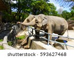 elephant are in the zoo | Shutterstock . vector #593627468