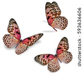 Stock photo beautiful three colorful butterfly isolated on white background 593636606