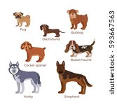 dog breed silhouette colorful... | Shutterstock .eps vector #593667563