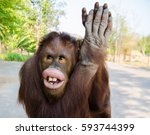 Funny Chimpanzee Greeting...