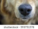 Dog. Nose. Close Up.          ...