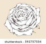 flower set  highly detailed... | Shutterstock .eps vector #593757554