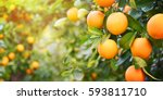 orange garden | Shutterstock . vector #593811710