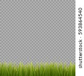 fresh green grass on... | Shutterstock .eps vector #593864540