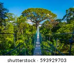 the path to mother earth  on a...   Shutterstock . vector #593929703