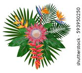 tropical bouquet with flowers... | Shutterstock .eps vector #593950250