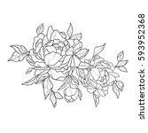 sketch of beautiful peonies on... | Shutterstock .eps vector #593952368