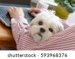 Stock photo man working and holding his liitle dog 593968376