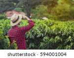 farmer with hat standing in a... | Shutterstock . vector #594001004