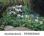 white corner with bearded iris... | Shutterstock . vector #594003464