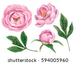 watercolor set of peonies and... | Shutterstock . vector #594005960