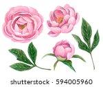 watercolor set of peonies and... | Shutterstock . vector #594005960