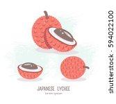 vector illustration of lychee... | Shutterstock .eps vector #594022100