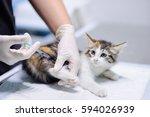 female veterinary doctor giving ... | Shutterstock . vector #594026939
