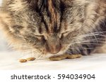Cat Eating Closeup. Muzzle Cat...
