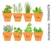 Set Of Vector Culinary Herbs I...