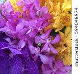 Multi Colored Orchids