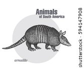 armadillo hand drawing. animals ...