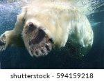 Give Me Five  Polar Bear Paw...