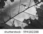 Macro Leaf In Black And White