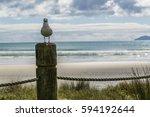 New Zealand   Gull   Fence  ...