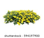 yellow flower bush tree... | Shutterstock . vector #594197900