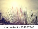 color toned dried plants... | Shutterstock . vector #594327248