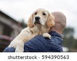 golden retriever portrait | Shutterstock . vector #594390563