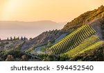 Southern California vineyards on a hillside, with hazy mountain background - stock photo