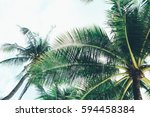 Coconut Palm Tree With Sunligh...