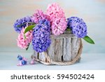Beautiful Hyacinth Flowers In ...