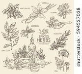 collection of herbs and spice ... | Shutterstock .eps vector #594537038