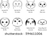 stylized owls isolated on white ... | Shutterstock .eps vector #594611006
