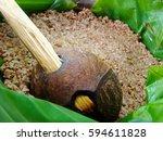 sri lanka traditional food... | Shutterstock . vector #594611828