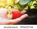 Strawberry On Hand With...