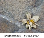 Small photo of Dry lotus flower on the stone pavings. Impermanence . Anitya
