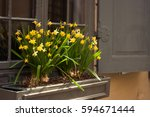 Yellow Daffodils In A Box By...