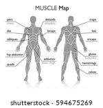 muscles in the body  vector | Shutterstock .eps vector #594675269