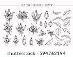 drawing flowers. vector... | Shutterstock .eps vector #594762194
