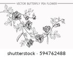 drawing flowers. vector... | Shutterstock .eps vector #594762488