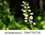 white flower is beautilful in... | Shutterstock . vector #594770729