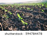 Crops Planted In Rich Soil Gro...