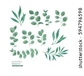 eucalyptus leaf collection.... | Shutterstock . vector #594796598